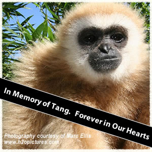 In Memory of Tang